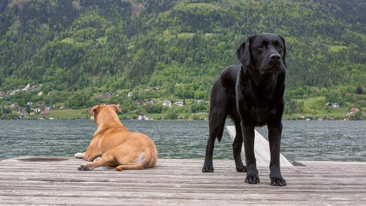 hund-steg-ossiachersee-villach