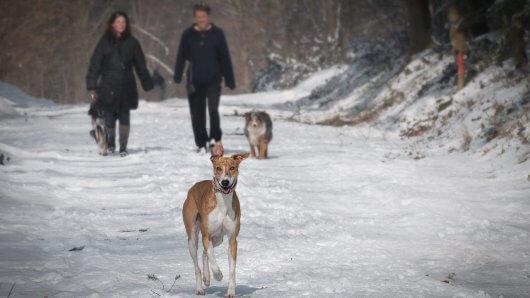 wandern-hund-schnee-mann-frau