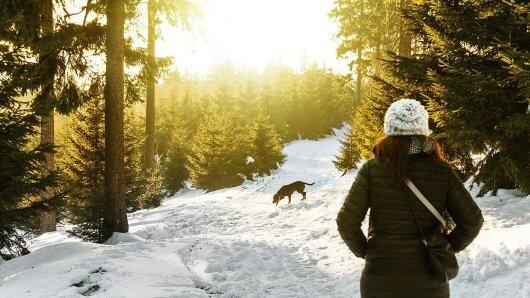 wandern-schnee-winter-hund-frau